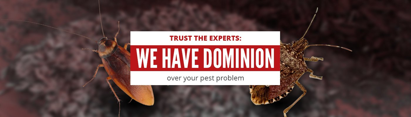 Trust the Experts: We have Dominion over your pest problem